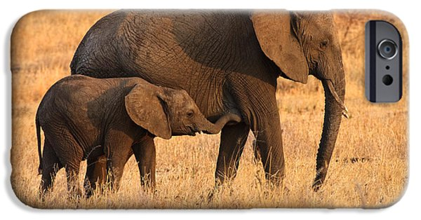 Reserve iPhone Cases - Mother and Baby Elephants iPhone Case by Adam Romanowicz