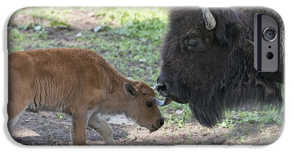Bonding iPhone Cases - Mother buffalo with her baby iPhone Case by Dan Friend
