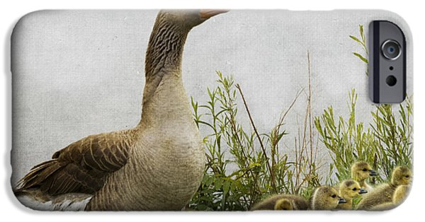 Mother Goose iPhone Cases - Mother Goose iPhone Case by Juli Scalzi