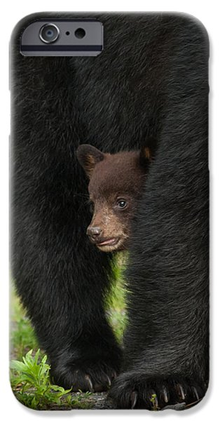 Love Asheville iPhone Cases - Mothers Shelter iPhone Case by Joye Ardyn Durham