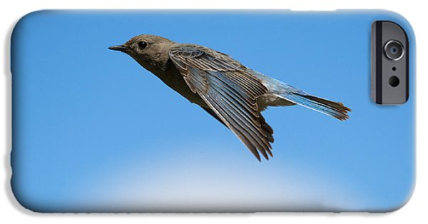 Flight iPhone Cases - Mountain Bluebird Glide iPhone Case by Mike Dawson