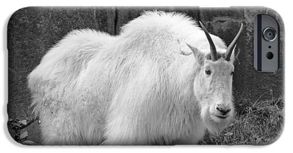 Gray Hair iPhone Cases - Mountain Goat BW iPhone Case by Marv Vandehey