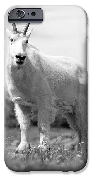 Cute Photographs iPhone Cases - Mountain Goat iPhone Case by Sebastian Musial