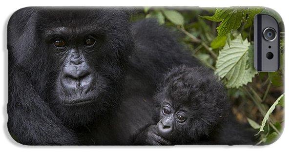 Gorilla iPhone Cases - Mountain Gorilla Mother Holding 3 Month iPhone Case by Suzi Eszterhas