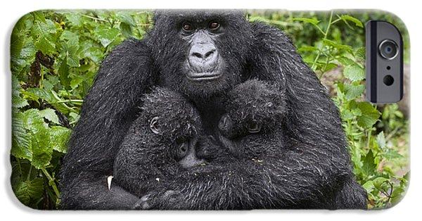 Gorilla iPhone Cases - Mountain Gorilla Mother Holding 5 Month iPhone Case by Suzi Eszterhas