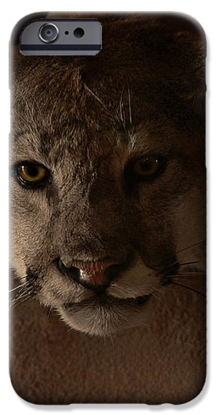 Mountain Lion A Large Graceful Cat iPhone Case by Christine Till