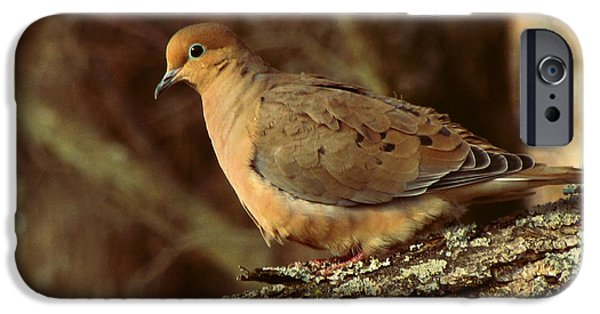 Earth Tone iPhone Cases - Mourning Dove at Dusk iPhone Case by Amy Tyler