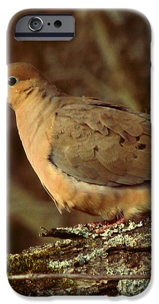 Mourning Dove at Dusk iPhone Case by Amy Tyler
