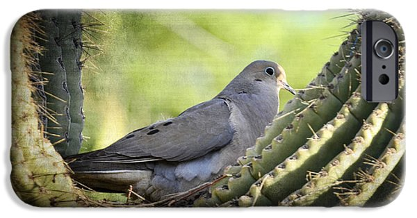 Mourning iPhone Cases - Mourning Dove in the Morning  iPhone Case by Saija  Lehtonen