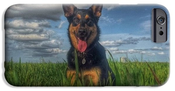 Hot Dogs iPhone Cases - Mr Darcy Squared iPhone Case by Isabella F Abbie Shores LstAngel Arts