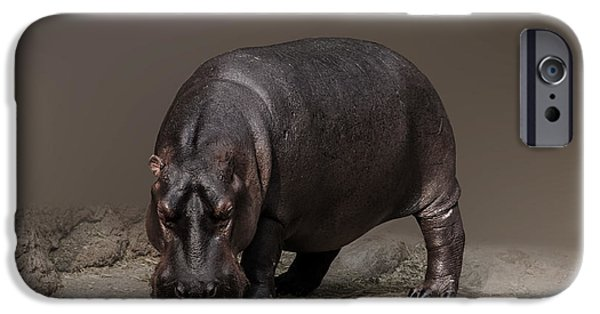 Hippopotamus iPhone Cases - Mr. Hippo iPhone Case by Charuhas Images