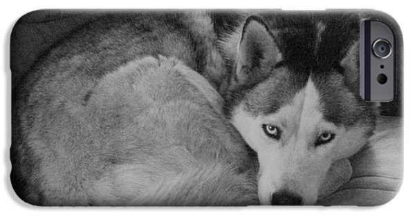 Husky iPhone Cases - Ms Yucaipa iPhone Case by Carol Brown