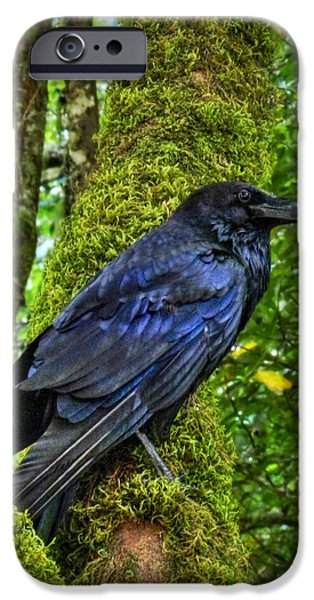 Corvid iPhone Cases - Muir Woods Raven 001 iPhone Case by Lance Vaughn