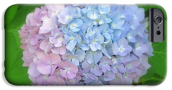 Innocence iPhone Cases - Multicolored Hydrangea iPhone Case by Kay Novy