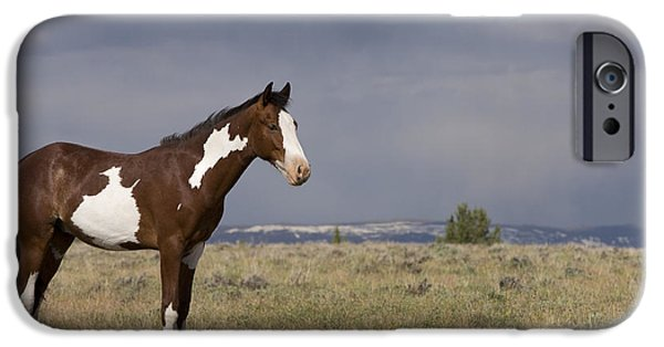 Overo iPhone Cases - Mustang Yearling iPhone Case by Jean-Louis Klein & Marie-Luce Hubert