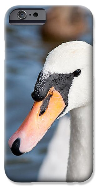 Swans... iPhone Cases - Mute swan adult bird iPhone Case by Arletta Cwalina
