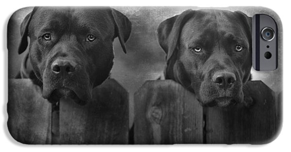 Best Sellers -  - Black Dog iPhone Cases - Mutt and Jeff iPhone Case by Larry Marshall