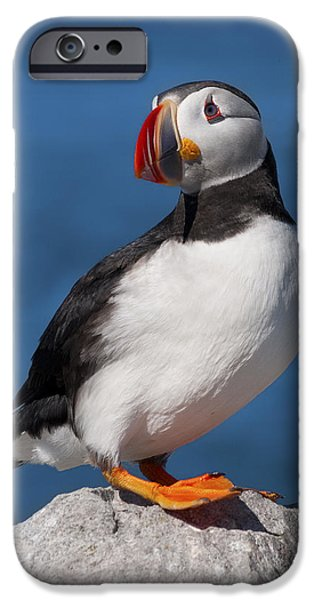 Sea Birds iPhone Cases - My best side.. iPhone Case by Nina Stavlund