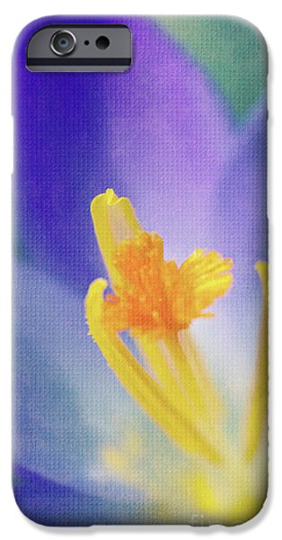 My crocus III iPhone Case by Angela Doelling AD DESIGN Photo and PhotoArt