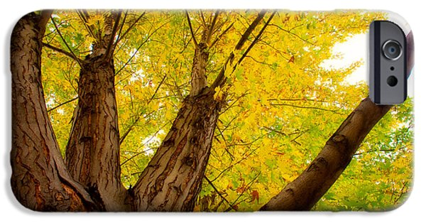 Tree Art Print iPhone Cases - My Maple Tree iPhone Case by James BO  Insogna