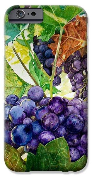 Napa Harvest iPhone Case by Lance Gebhardt