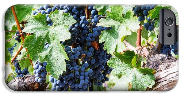 Crops iPhone Cases - Napa Valley Wine Grapes 2 iPhone Case by Jacque The Muse Photography