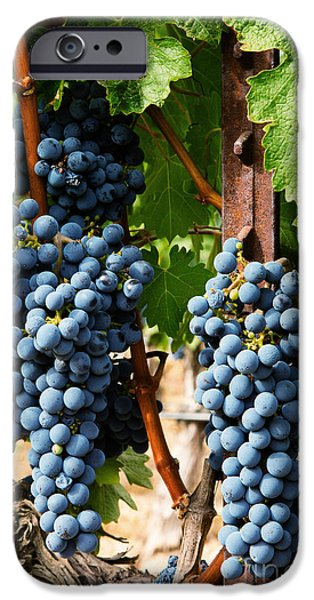 United States iPhone Cases - Napa Valley Wine Grapes iPhone Case by Jacque The Muse Photography