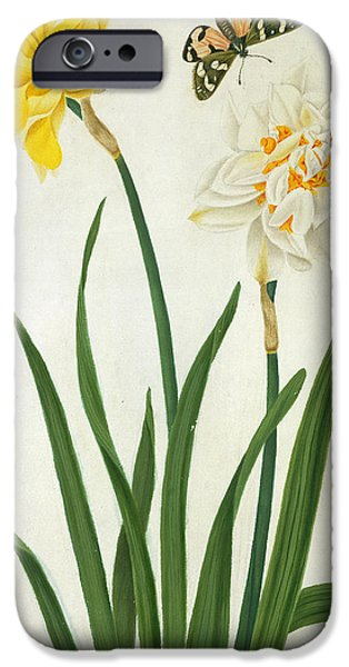 Flora Drawings iPhone Cases - Narcissi and Butterfly iPhone Case by Matilda Conyers