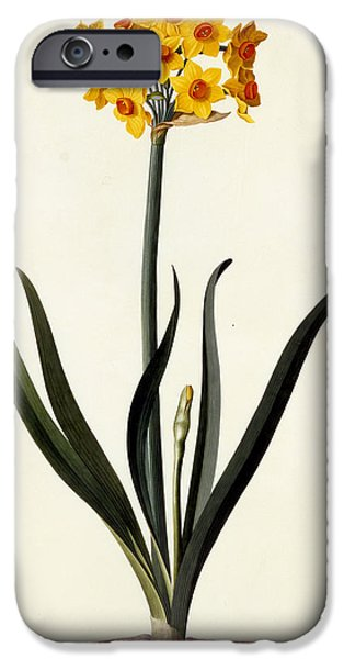 Flora Drawings iPhone Cases - Narcissus iPhone Case by Georg Dionysius Ehret