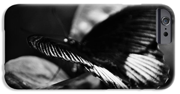 National Museum Of America History iPhone Cases - National Butterfly Pavilion BW iPhone Case by Kyle Hanson