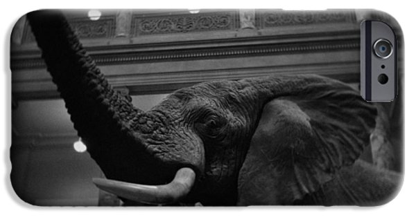 National Museum Of America History iPhone Cases - National Museum of Natural History African Elephant BW iPhone Case by Kyle Hanson