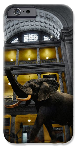 National Museum Of America History iPhone Cases - National Museum of Natural History African Elephant Portrait iPhone Case by Kyle Hanson