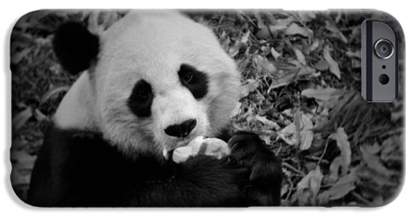 Smithsonian National Zoological Park iPhone Cases - National Zoo Giant Panda iPhone Case by Kyle Hanson