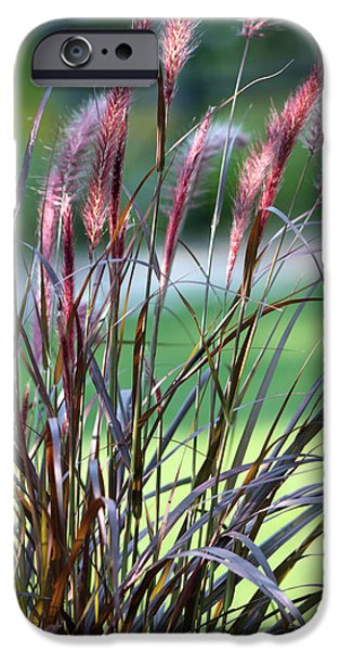 D.c. iPhone Cases - Native Grasses #3 iPhone Case by Eric Roach