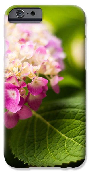 Purple Hydrangea iPhone Cases - Natural Beauty iPhone Case by Parker Cunningham