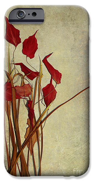 Still Life iPhone Cases - Nature Morte du Moment t01 iPhone Case by Variance Collections
