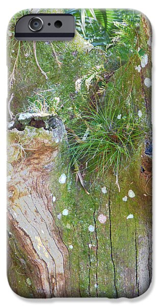 Nature Abstract iPhone Cases - Natures Abstract iPhone Case by Rosalie Scanlon