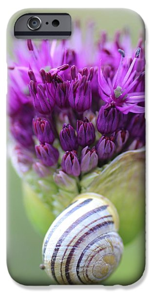 Allium Hollandicum iPhone Cases - Natures Forms and Colours iPhone Case by Rumyana Whitcher
