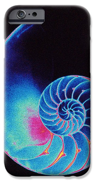 Shell Spiral iPhone Cases - Nautilus Shell iPhone Case by Pasieka