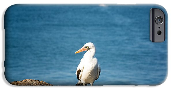 Boobies iPhone Cases - Nazca Booby on a Rock iPhone Case by Jess Kraft