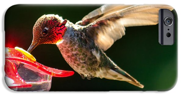 Duchess iPhone Cases - Annas Hummingbird at Feeder iPhone Case by Brian Tada