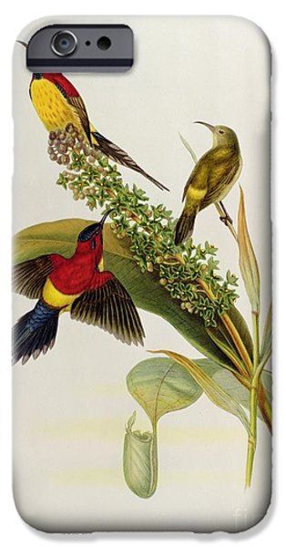 Recently Sold -  - Birds iPhone Cases - Nectarinia Gouldae iPhone Case by John Gould