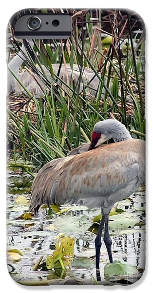 Instinct iPhone Cases - Nesting Sandhill Crane Pair iPhone Case by Carol Groenen
