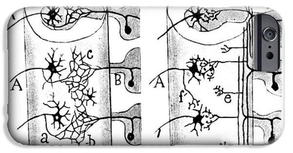 Neurons iPhone Cases - Neuroglia Cells Illustrated By Cajal iPhone Case by Science Source