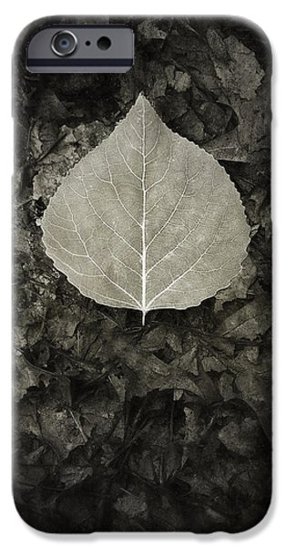 Contemplative iPhone Cases - New Leaf on the Old iPhone Case by Scott Norris