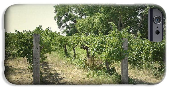Vineyard Prints iPhone Cases - New Mexico Vineyard Field Trees iPhone Case by Andrea Hazel Ihlefeld