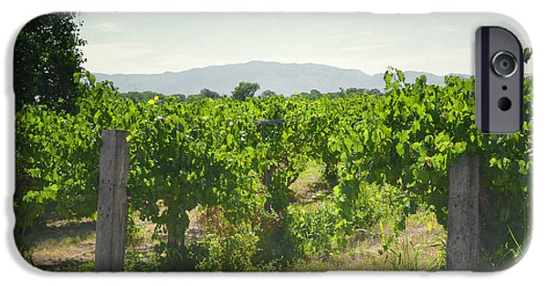 Vineyard Prints iPhone Cases - New Mexico Vineyard Summer Field iPhone Case by Andrea Hazel Ihlefeld