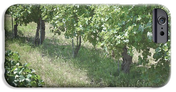 Vineyard Prints iPhone Cases - New Mexico Vineyard Trees iPhone Case by Andrea Hazel Ihlefeld