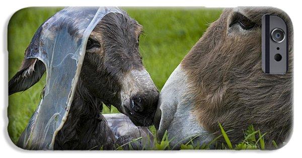 Bonding iPhone Cases - Newborn Donkey iPhone Case by Jean-Louis Klein & Marie-Luce Hubert