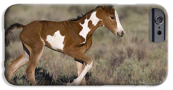 Overo iPhone Cases - Newborn Mustang iPhone Case by Jean-Louis Klein & Marie-Luce Hubert
